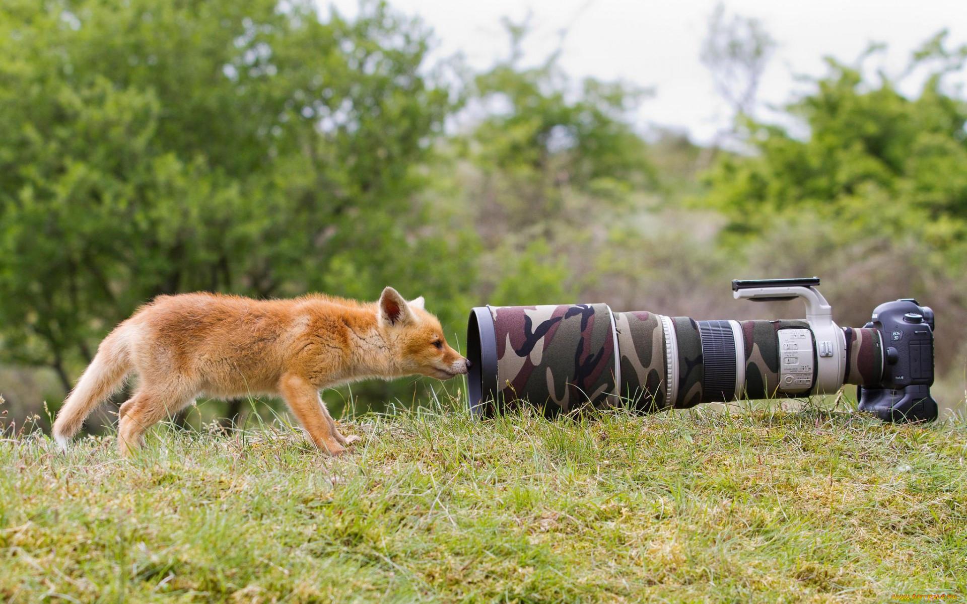 курсы фотографии животных танкетку выбирают обладательницы